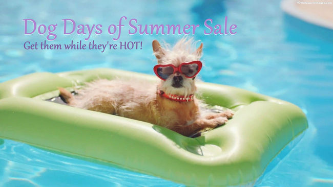 Aug 2019 Dog-In-Swimming-Pool-Wearing-Sunglasses Rev 2